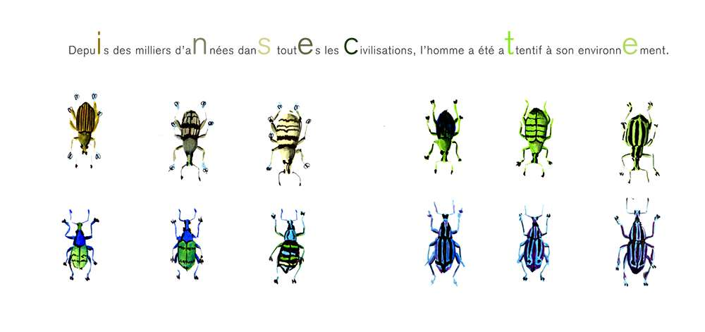 illustrations-insecte-5