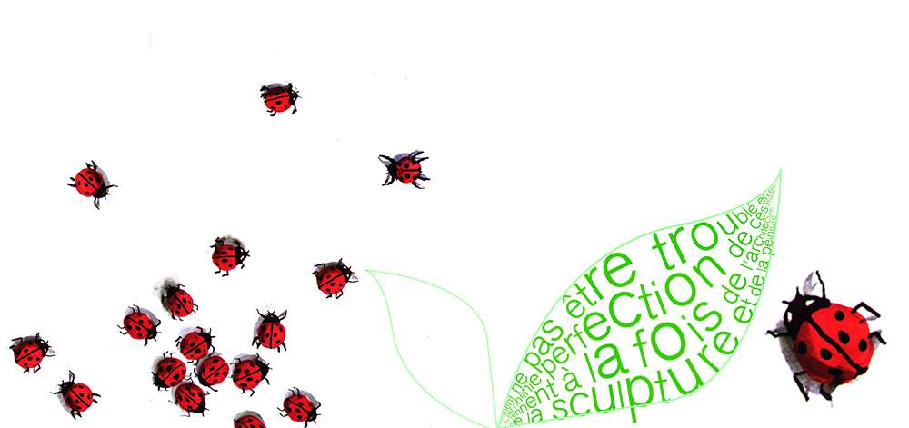 illustrations-insecte-7