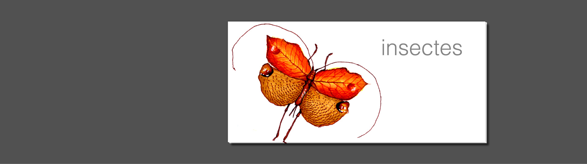 slider-illustration-livre-insectes